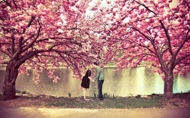 6961272-spring-blossom-love-kiss